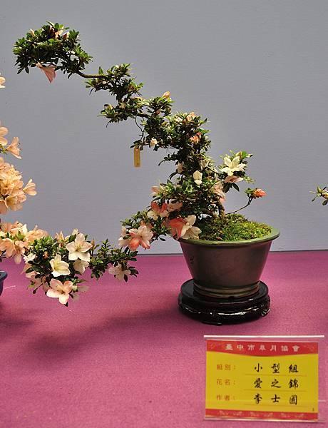 2018台中皋月展_00086.jpg