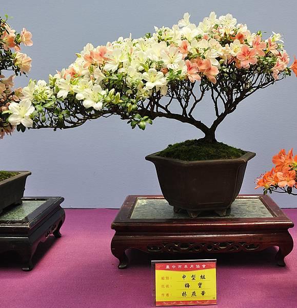 2018台中皋月展_00116.jpg