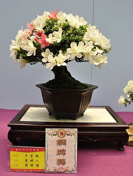 2018台中皋月展_00122.jpg