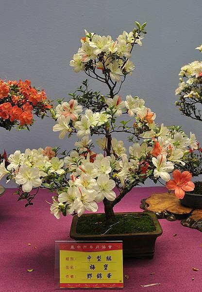 2018台中皋月展_00125.jpg