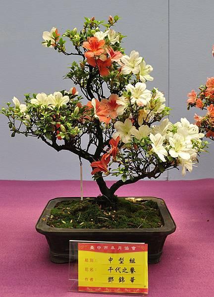 2018台中皋月展_00127.jpg