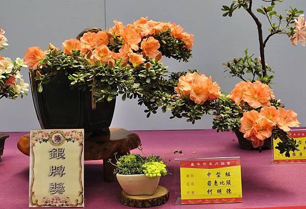 2018台中皋月展_00131.jpg
