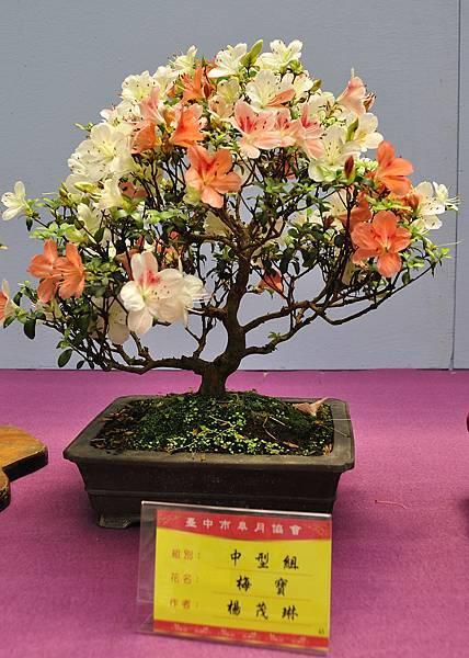 2018台中皋月展_00132.jpg