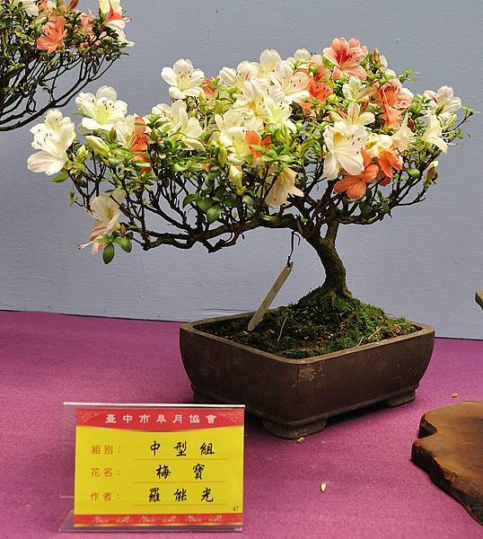2018台中皋月展_00134.jpg