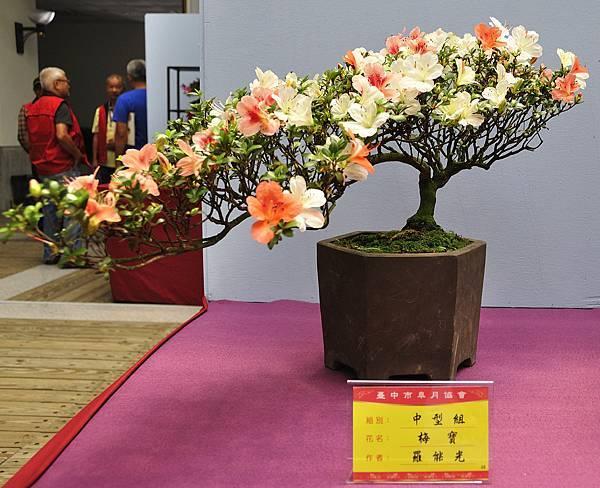 2018台中皋月展_00135.jpg