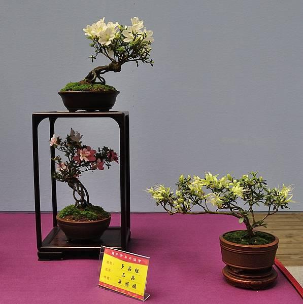 2018台中皋月展_00158.jpg
