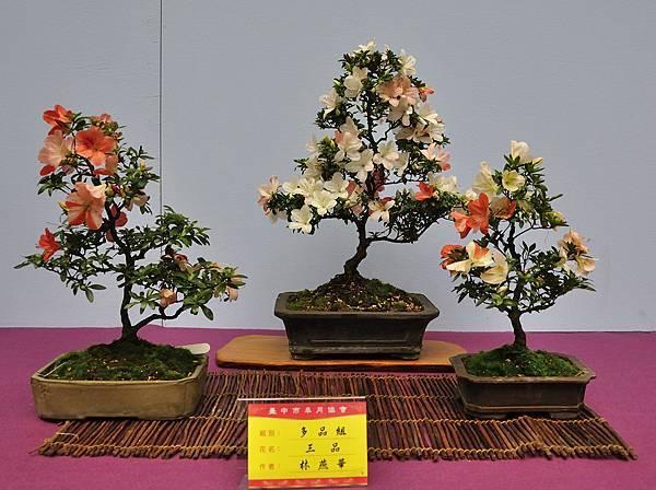 2018台中皋月展_00162.jpg