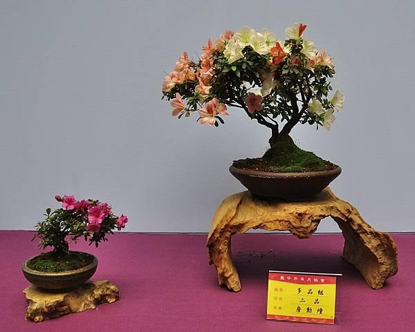 2018台中皋月展_00161.jpg