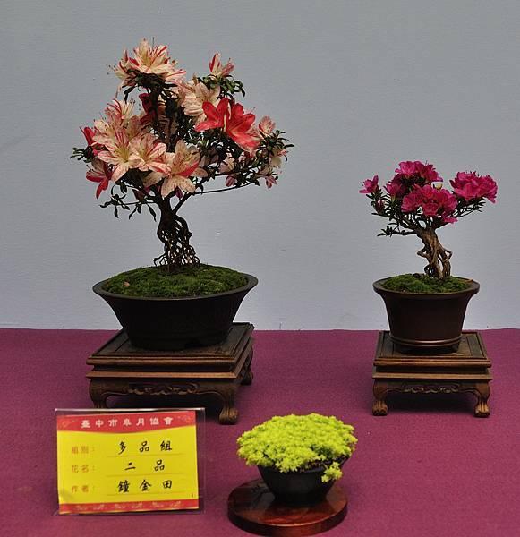 2018台中皋月展_00167.jpg