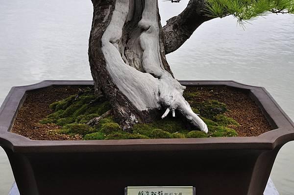2018明潭松韻樹石大展_00027.jpg