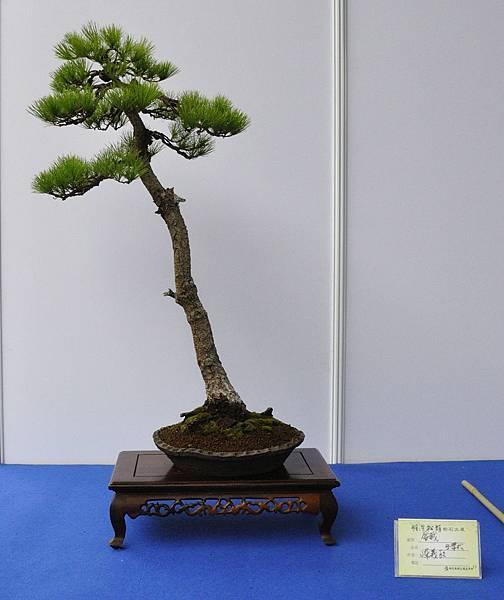 2018明潭松韻樹石大展_00136.jpg