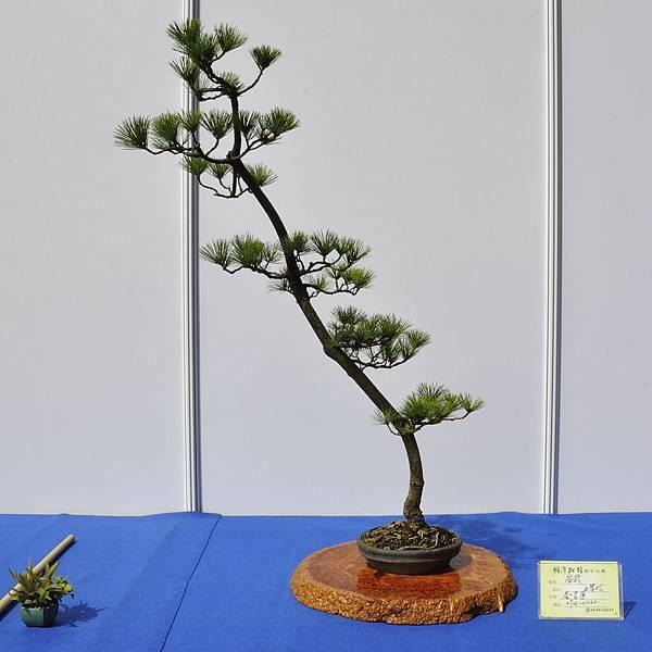 2018明潭松韻樹石大展_00162.jpg