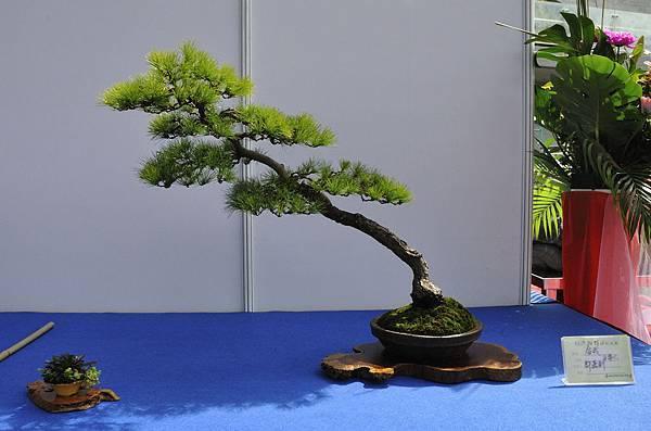 2018明潭松韻樹石大展_00164.jpg