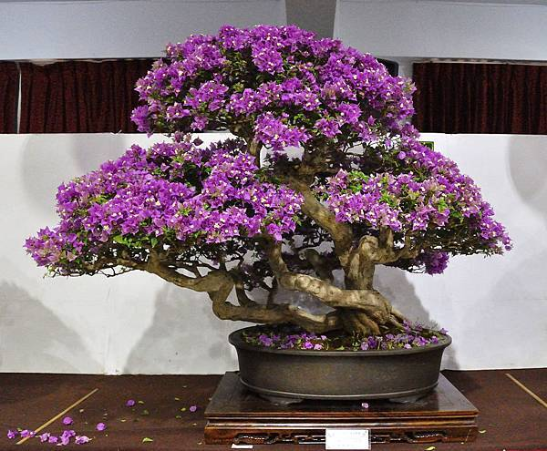 2018台灣花菓盆栽展_00035.jpg