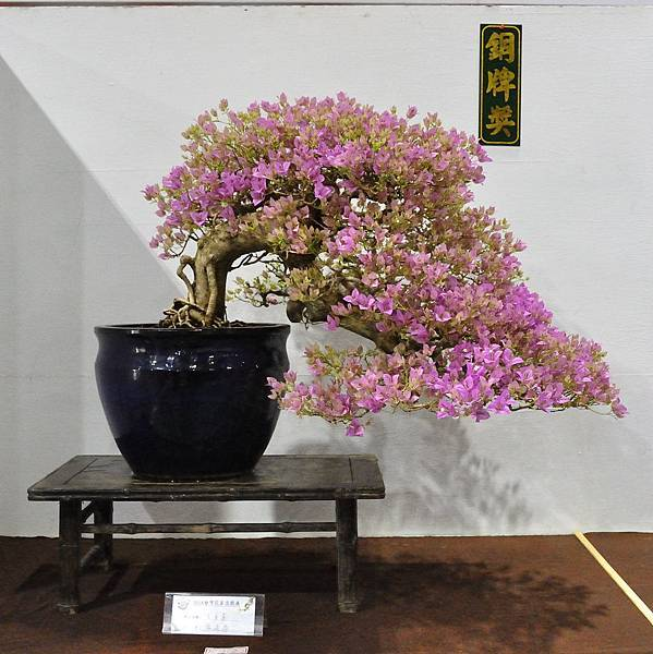 2018台灣花菓盆栽展_00048.jpg