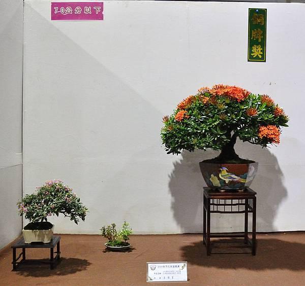 2018台灣花菓盆栽展_00047.jpg