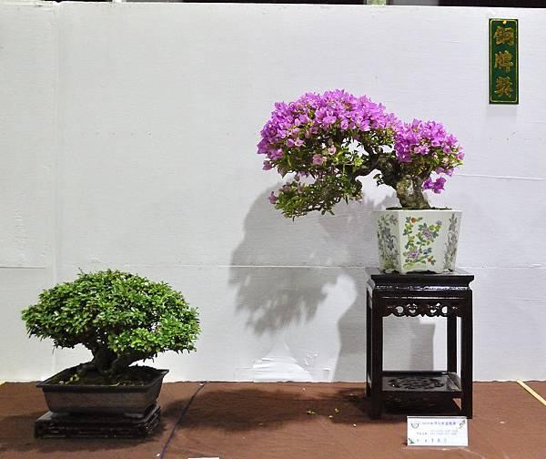 2018台灣花菓盆栽展_00049.jpg