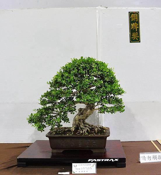 2018台灣花菓盆栽展_00052.jpg