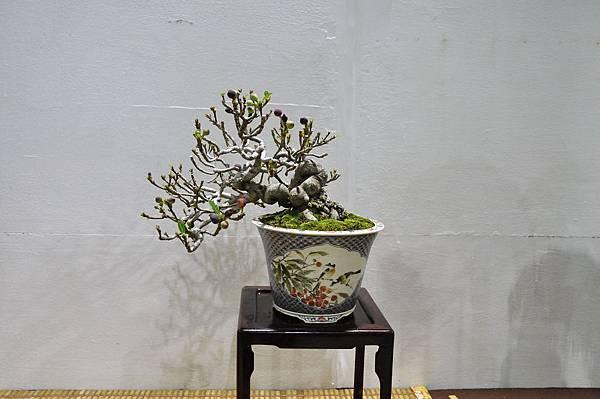 2018台灣花菓盆栽展_00054.jpg
