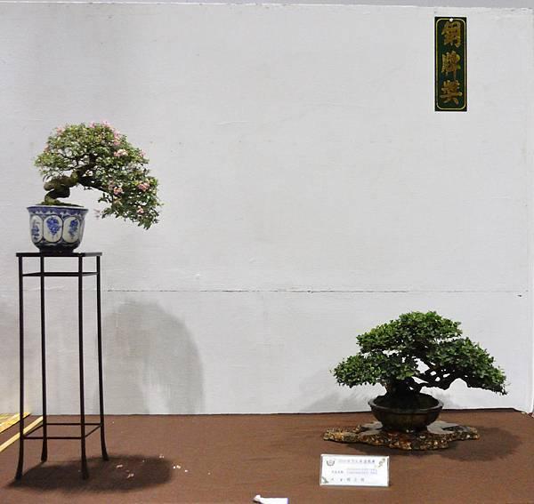 2018台灣花菓盆栽展_00056.jpg