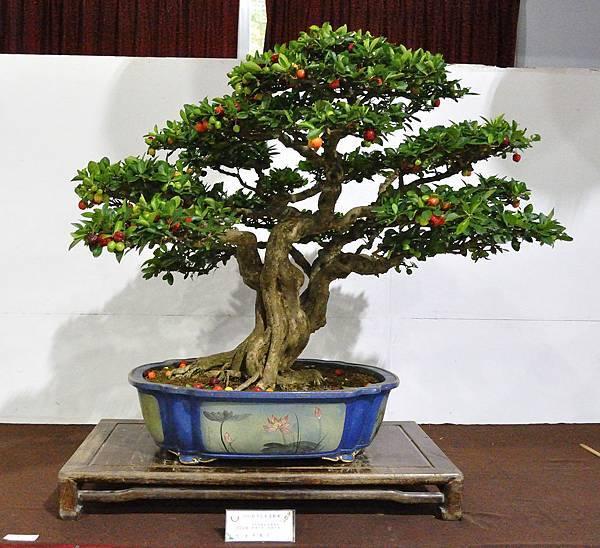 2018台灣花菓盆栽展_00075.jpg