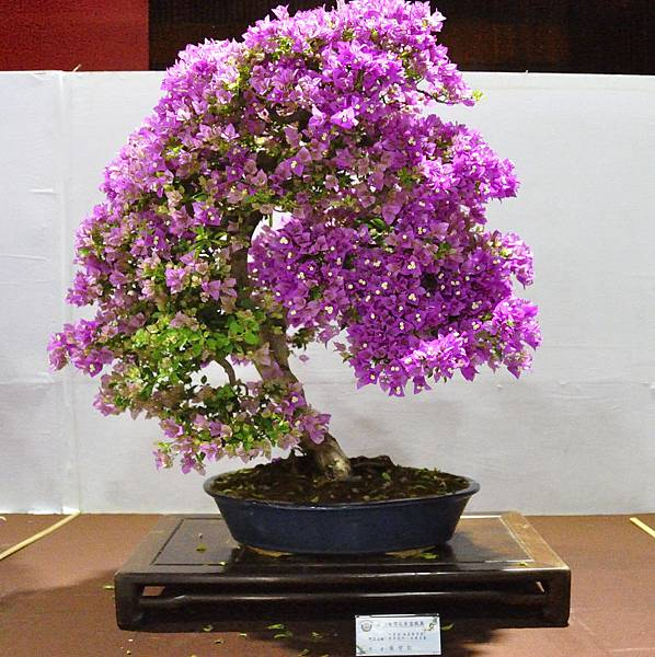 2018台灣花菓盆栽展_00086.jpg