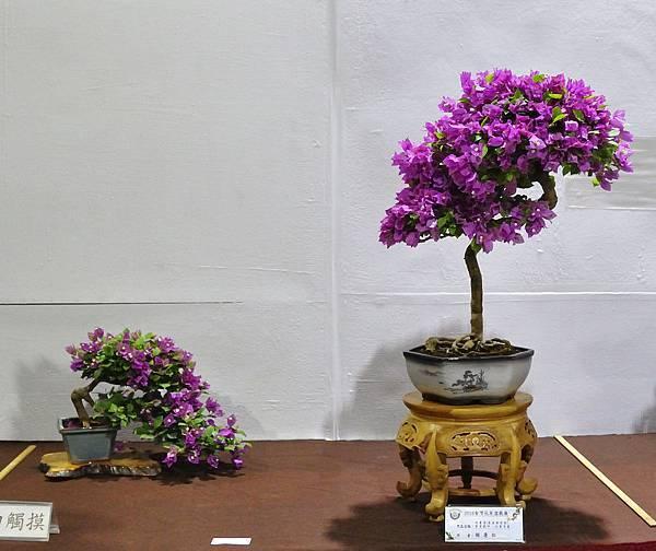 2018台灣花菓盆栽展_00109.jpg