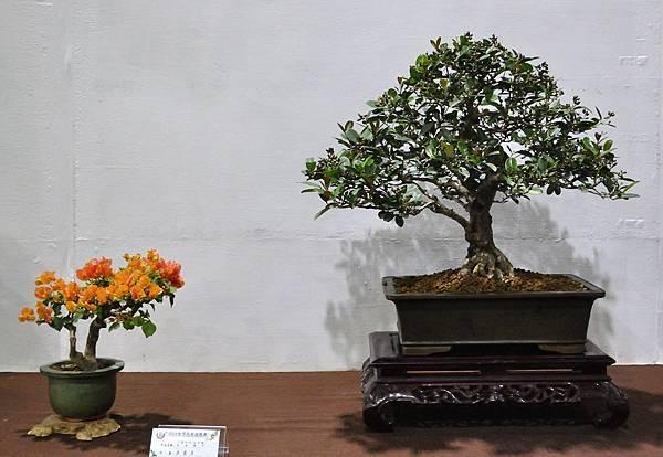2018台灣花菓盆栽展_00119.jpg