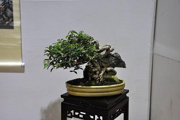 2018台灣花菓盆栽展_00116.jpg