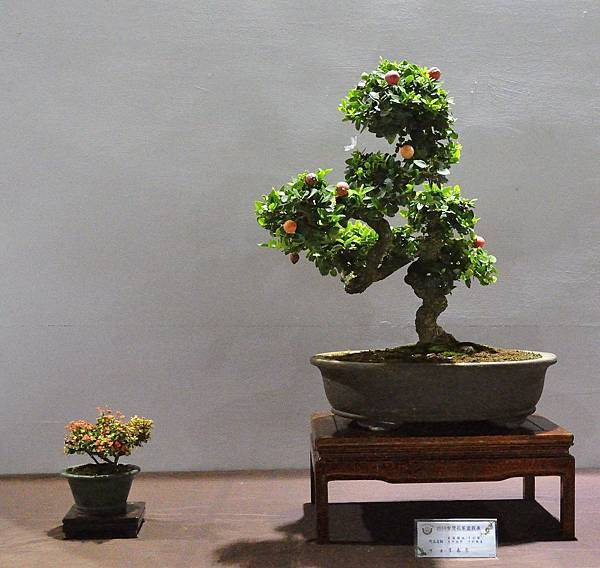 2018台灣花菓盆栽展_00124.jpg