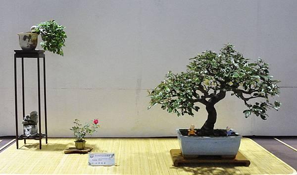 2018台灣花菓盆栽展_00127.jpg