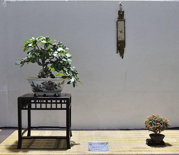 2018台灣花菓盆栽展_00126.jpg