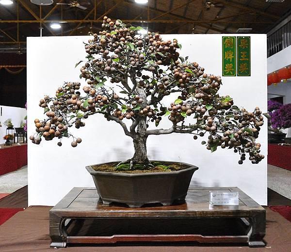 2018台灣花菓盆栽展_00016.jpg