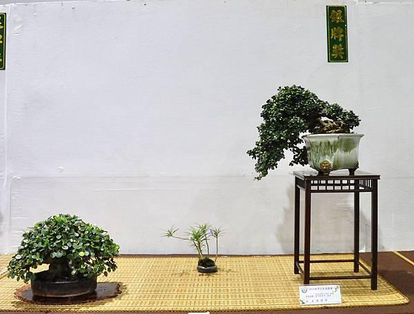 2018台灣花菓盆栽展_00019.jpg