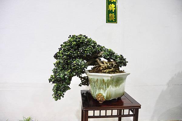2018台灣花菓盆栽展_00020.jpg