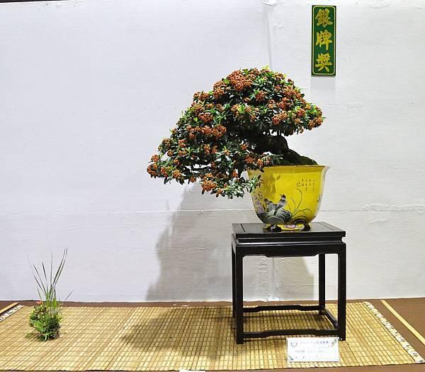 2018台灣花菓盆栽展_00028.jpg