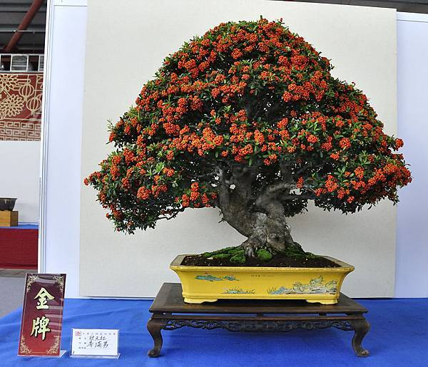 2018中華古榕盆栽展_00064.jpg