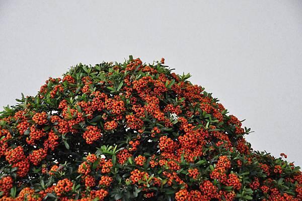 2018中華古榕盆栽展_00072.jpg