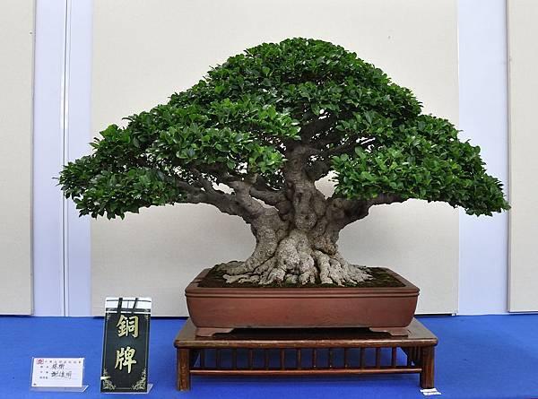 2018中華古榕盆栽展_00084.jpg