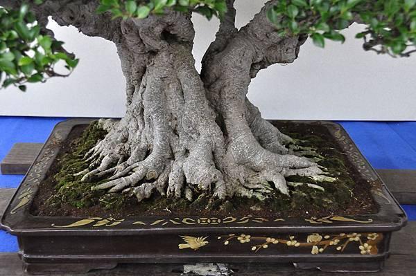 2018中華古榕盆栽展_00023.jpg