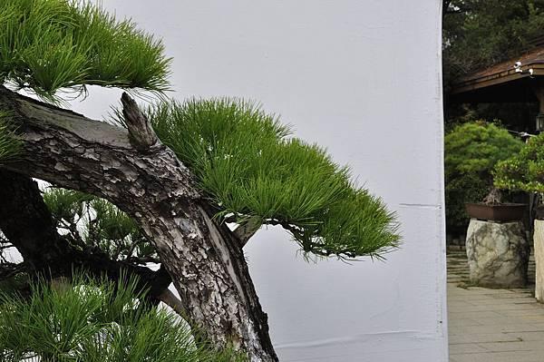 2018台中盆栽展_00114.jpg