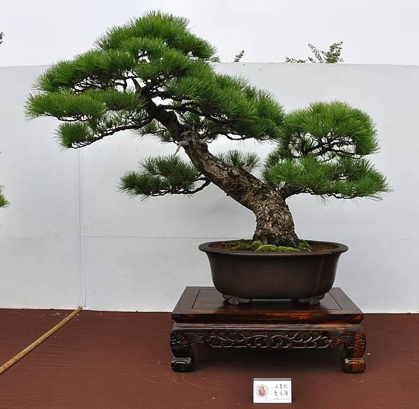 2018台中盆栽展_00140.jpg