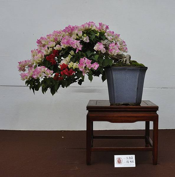 2018台中盆栽展_00144.jpg