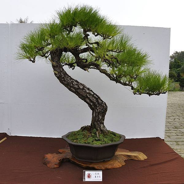 2018台中盆栽展_00149.jpg