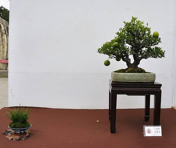 2018台中盆栽展_00150.jpg