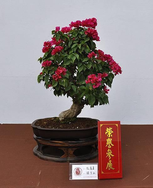 2018台中盆栽展_00158.jpg