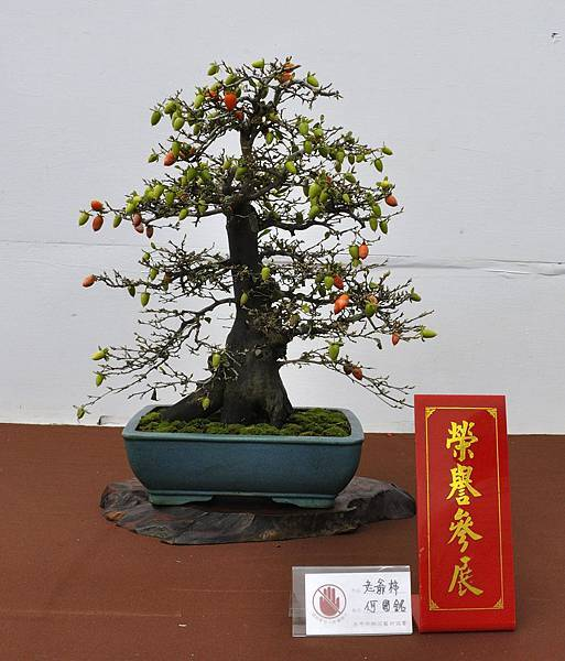 2018台中盆栽展_00159.jpg