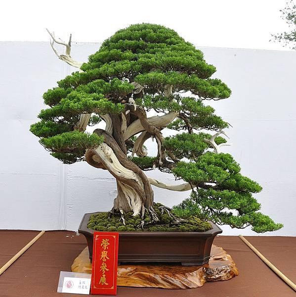 2018台中盆栽展_00161.jpg
