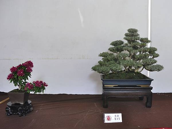 2018台中盆栽展_00171.jpg