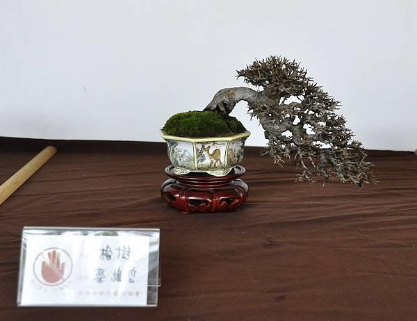 2018台中盆栽展_00180.jpg